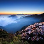 Flowers on the hilltop wallpaper