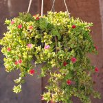Beautiful flower hanging basket wallpaper