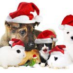 Christmas cute animal wallpaper
