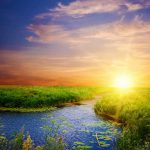 Beautiful grassland wallpaper