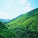 Grassland scenery wallpaper