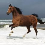 Leaping horse wallpaper