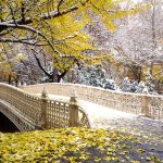 Early Snowfall, Central Park, New York hd wallpaper