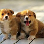 Two cute puppies wallpaper pictures