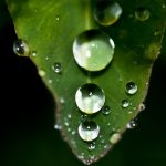 Water drops on green leaf desktop background