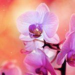 Quiet orchid desktop wallpaper