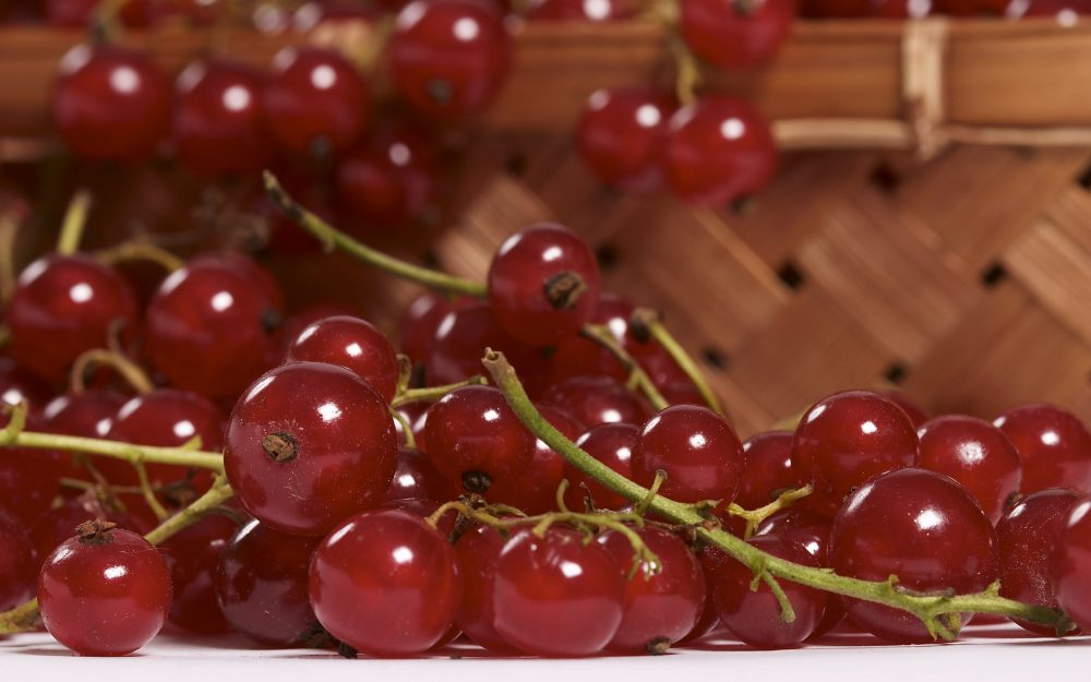 Red currant wallpaper