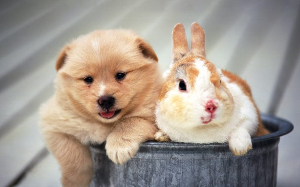 Puppy and rabbit hd wallpaper