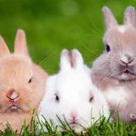 Three cute little rabbits