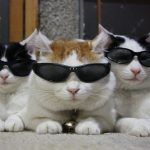 Cute cat uncle HD wallpaper big picture