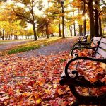 Autumn park fallen leaves beautiful wallpaper