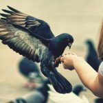 Little girl feeding pigeons wallpaper picture
