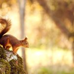 Cute little squirrel in the autumn woods wallpaper