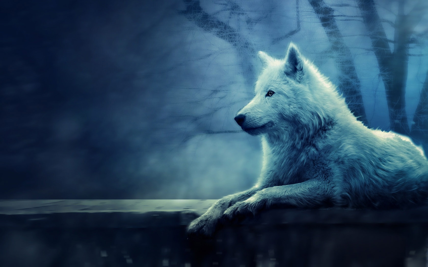 Northern wolf desktop wallpaper