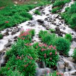 River in flowers wallpaper