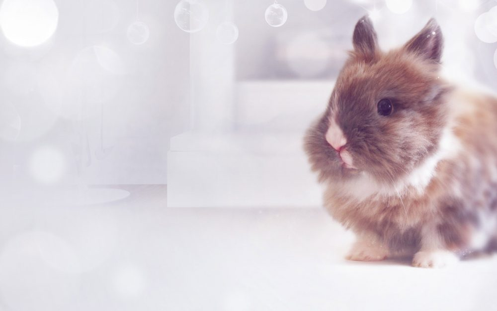 New Year Gift Cute Bunny Wallpaper 8wallpapers