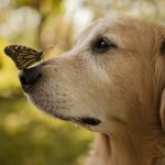 Cute desktop wallpaper with dog and butterfly