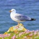 Beautiful seagull HD wallpaper by the sea