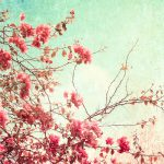 Semi-flowering tree branches wallpaper