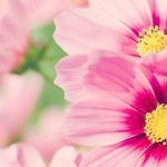HD Flowers Desktop Background Picture