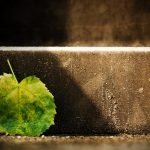 The leaf at the curb wallpaper