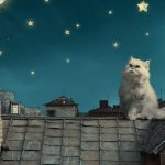 Persian cat landscape desktop wallpaper on the roof