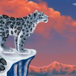 Snow leopard looks at the moon desktop wallpaper