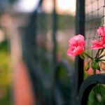 Flower sprouting through the fence mesh wallpaper