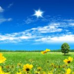 Sunny summer hd wallpaper