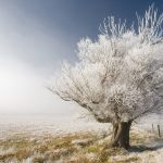 Winter, big tree, fence, grass, landscape desktop wallpaper