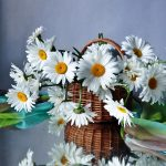 Chamomile in a basket wallpaper