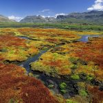 Colorful Mosses, Cedarberg Wilderness Area, Northern Cape, South Africa wallpaper