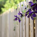 Flowers on the fence desktop wallpaper