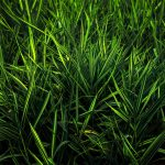 Dark green grass macro shot wallpaper