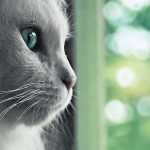 Green eye cat wallpaper