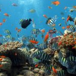 Underwater World hd wallpaper