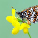 Butterfly flower macro wallpaper