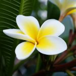 White and yellow flower petals desktop background