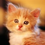 Kitten widescreen desktop wallpaper