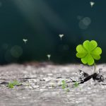 Beautiful four-leaf clover wallpaper picture