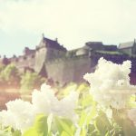 Small white flowers in front of the castle wallpaper