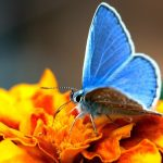 butterfly macro wallpaper