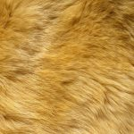 Texture fur, skin wallpaper