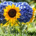 Sunflower with blue flowers wallpaper