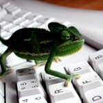 Chameleon creative desktop wallpaper on keyboard