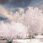trees snow winter trees snow winter wallpaper