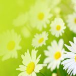 Xiangyangju small fresh flowers desktop background picture