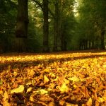 Road of autumn leaves wallpaper