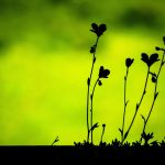 Beautiful flower small grass green desktop background picture