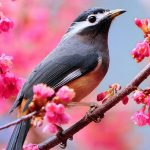 Birds on the flowery branches, HD photography wallpaper